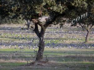 palomas en caceres