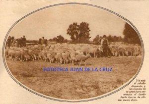 El rebaño de la trashumancia que protagoniza el relato. 1936.